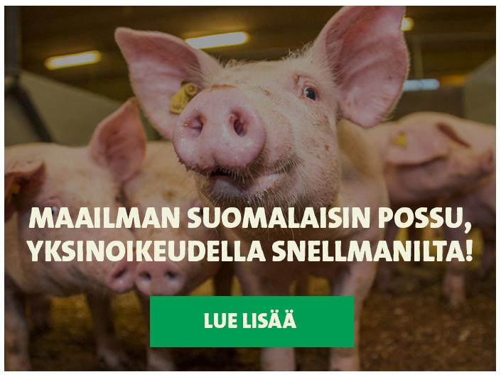 Snellman - Digitaalinen markkinointikampanja 9